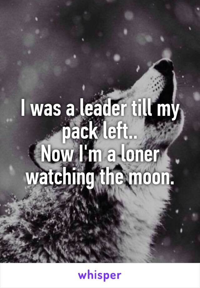 I was a leader till my pack left.. Now I'm a loner watching the moon.