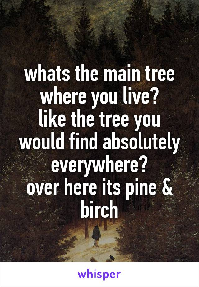 whats the main tree where you live? like the tree you would find absolutely everywhere? over here its pine & birch