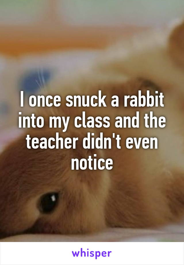 I once snuck a rabbit into my class and the teacher didn't even notice