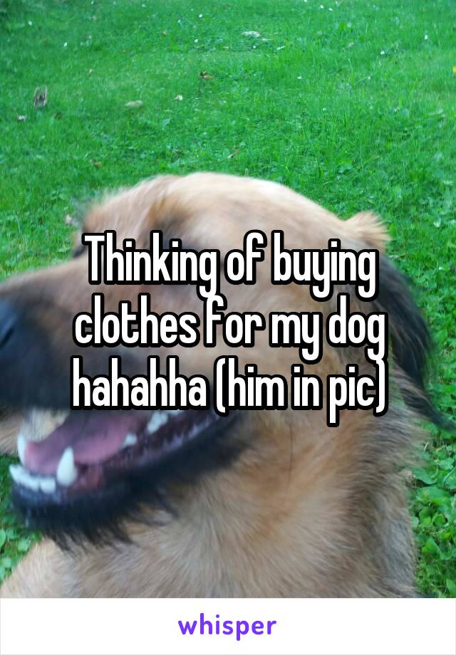 Thinking of buying clothes for my dog hahahha (him in pic)