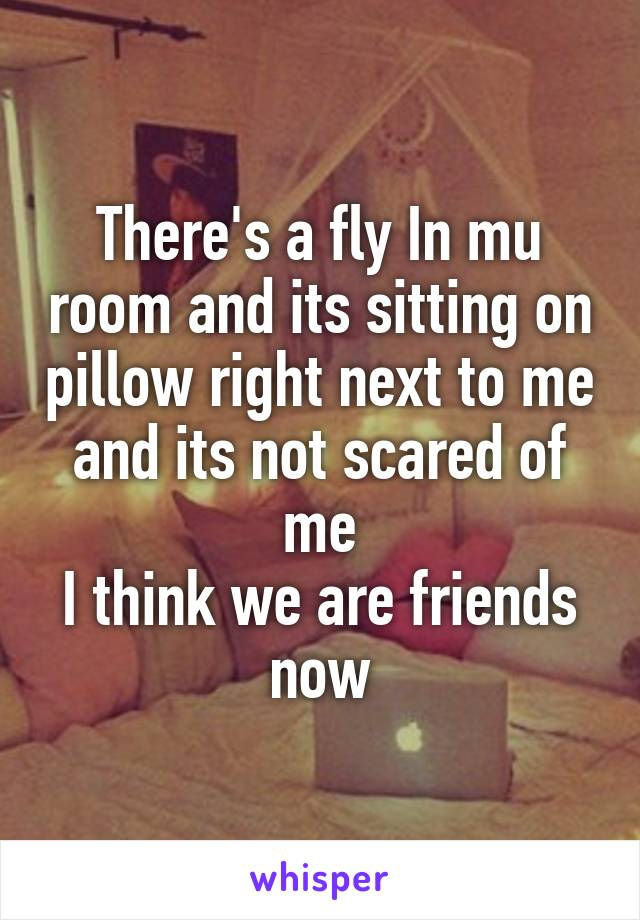 There's a fly In mu room and its sitting on pillow right next to me and its not scared of me I think we are friends now