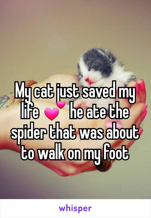 My cat just saved my life 💕 he ate the spider that was about to walk on my foot