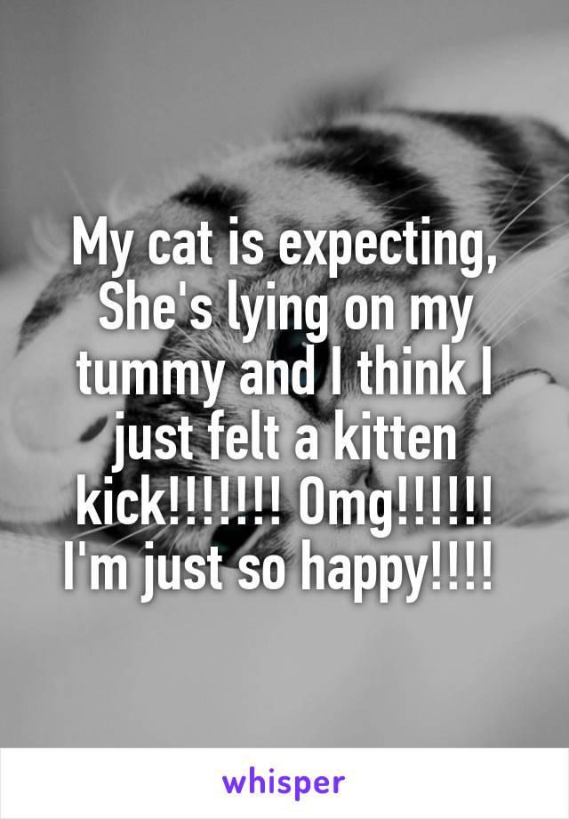My cat is expecting, She's lying on my tummy and I think I just felt a kitten kick!!!!!!! Omg!!!!!! I'm just so happy!!!!