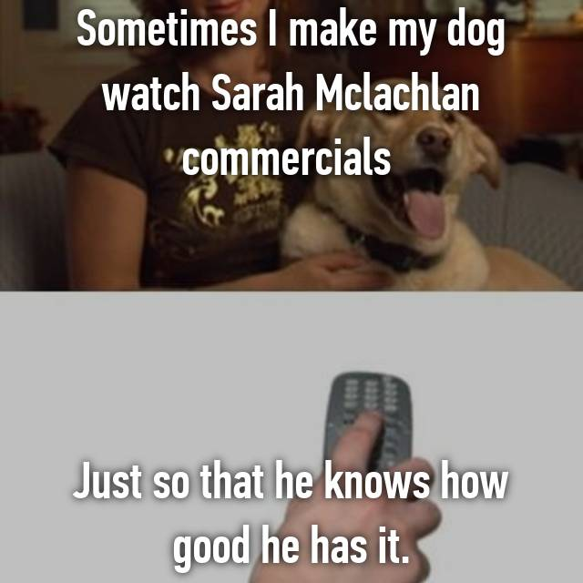 sometimes i make my dog watch sarah mclachlan commercials just so