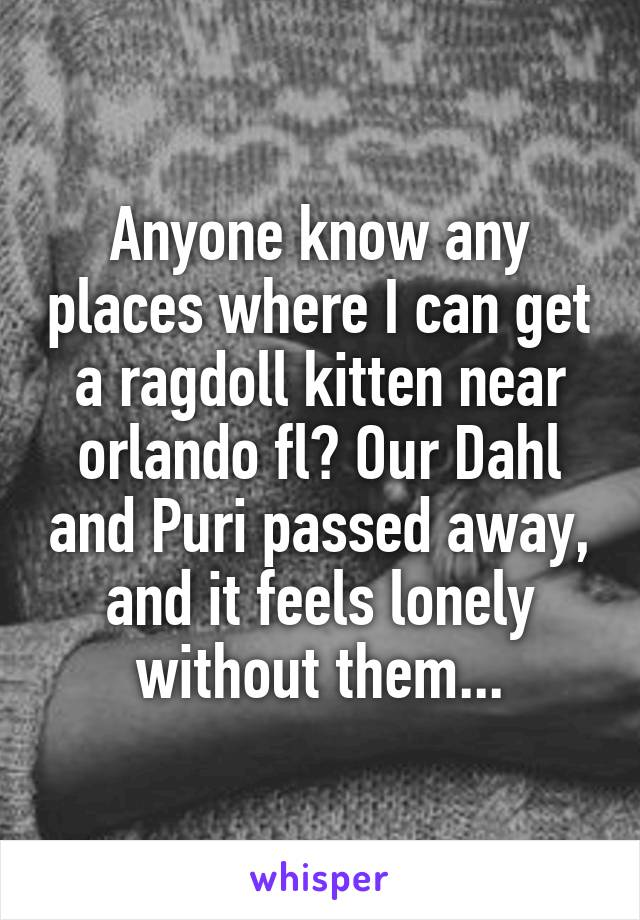 Anyone know any places where I can get a ragdoll kitten near orlando fl? Our Dahl and Puri passed away, and it feels lonely without them...