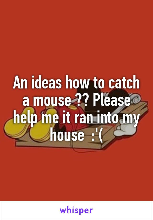 An ideas how to catch a mouse ?? Please help me it ran into my house  :'(