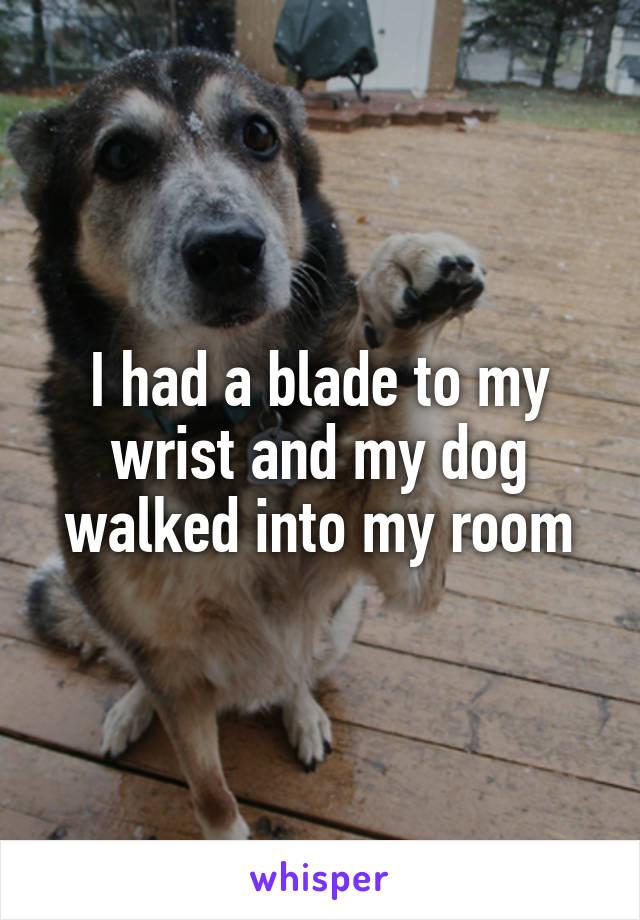 I had a blade to my wrist and my dog walked into my room