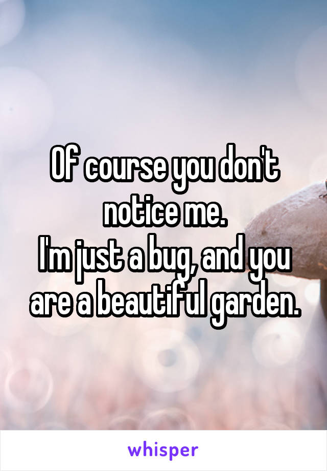Of course you don't notice me. I'm just a bug, and you are a beautiful garden.