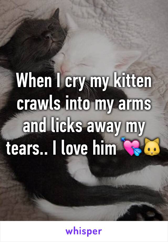 When I cry my kitten crawls into my arms and licks away my tears.. I love him 💘🐱