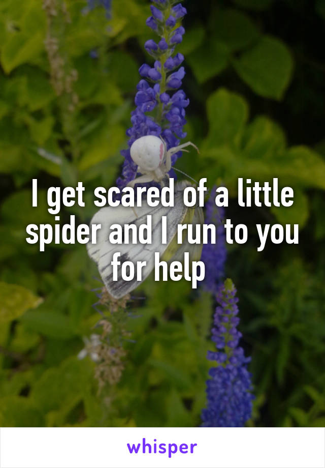 I get scared of a little spider and I run to you for help