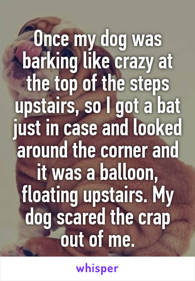 Once my dog was barking like crazy at the top of the steps upstairs, so I got a bat just in case and looked around the corner and it was a balloon, floating upstairs. My dog scared the crap out of me.