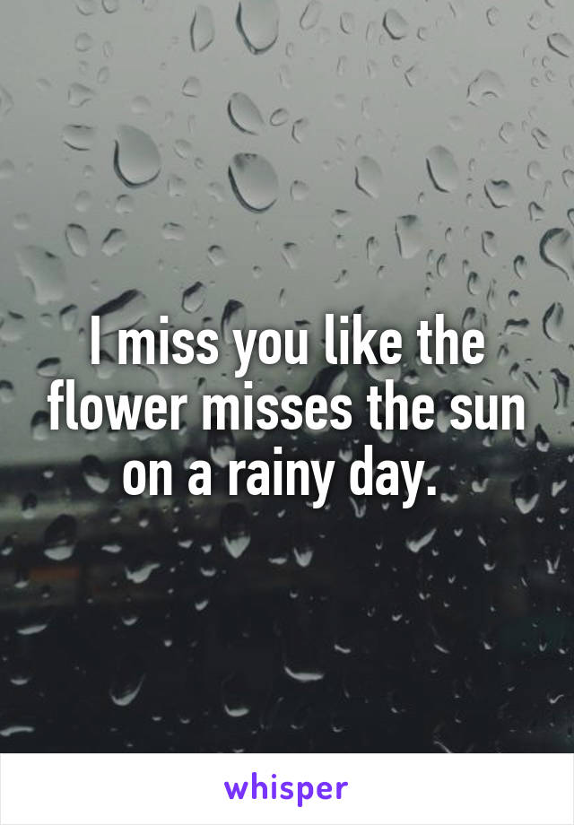 i miss you like the flower misses the sun on a rainy day