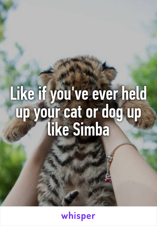 Like if you've ever held up your cat or dog up like Simba