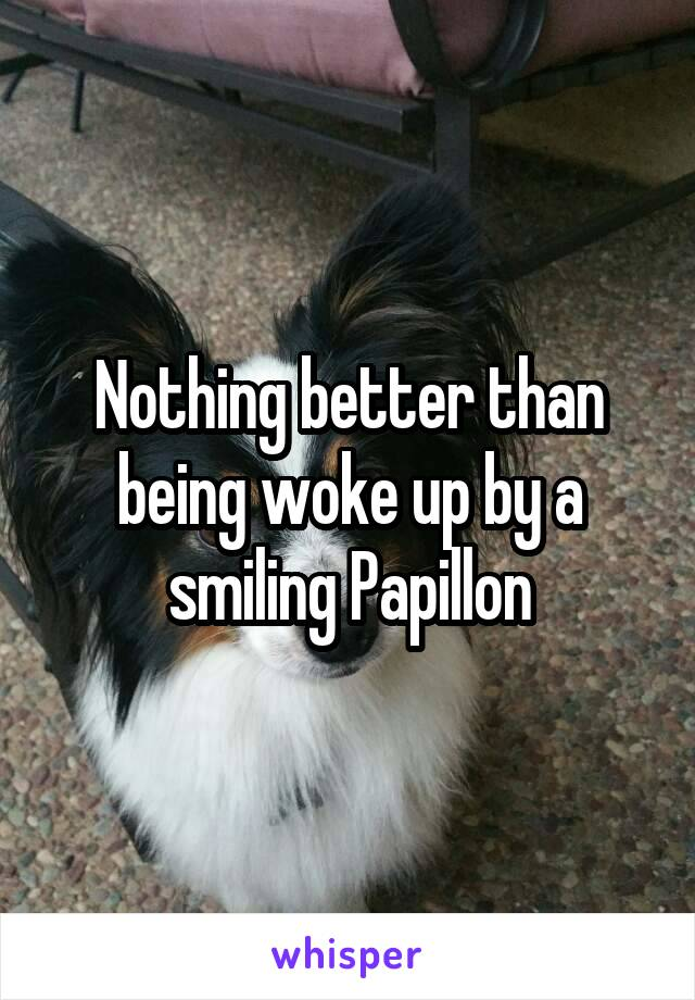 Nothing better than being woke up by a smiling Papillon