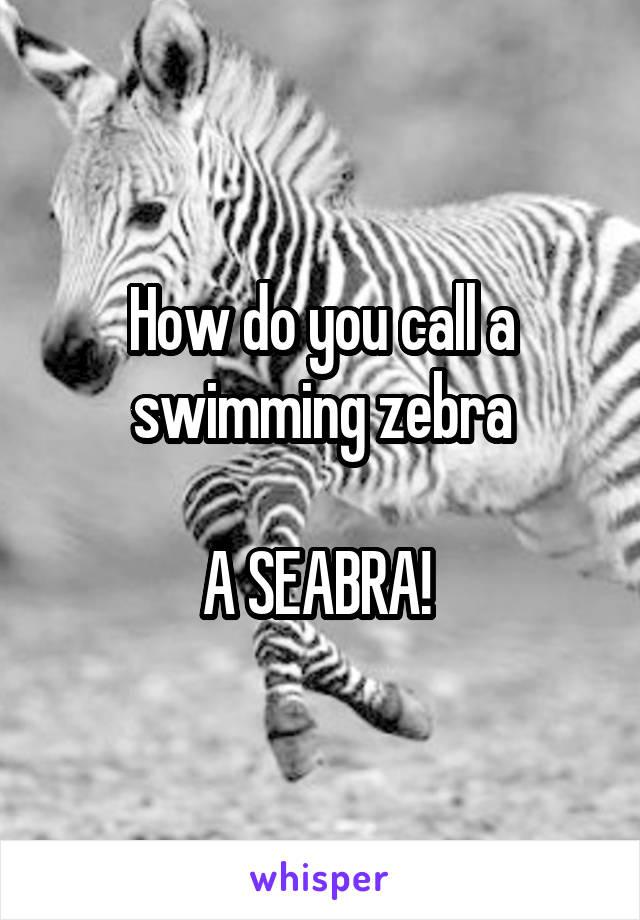 How do you call a swimming zebra  A SEABRA!