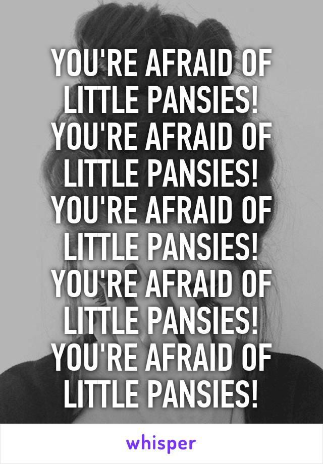 YOU'RE AFRAID OF LITTLE PANSIES! YOU'RE AFRAID OF LITTLE PANSIES! YOU'RE AFRAID OF LITTLE PANSIES! YOU'RE AFRAID OF LITTLE PANSIES! YOU'RE AFRAID OF LITTLE PANSIES!