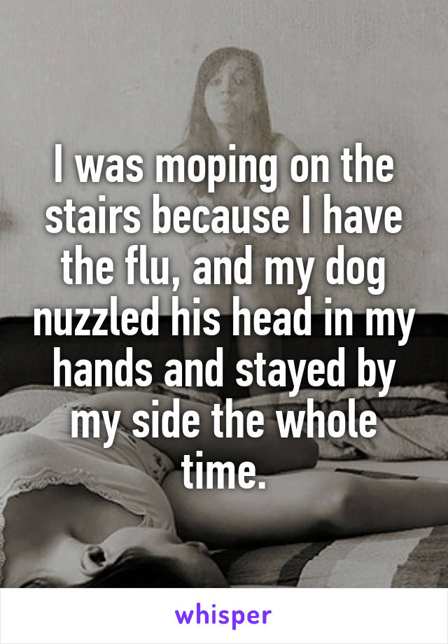 I was moping on the stairs because I have the flu, and my dog nuzzled his head in my hands and stayed by my side the whole time.