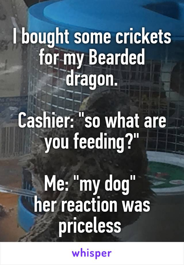 """I bought some crickets for my Bearded dragon.  Cashier: """"so what are you feeding?""""  Me: """"my dog""""  her reaction was priceless"""