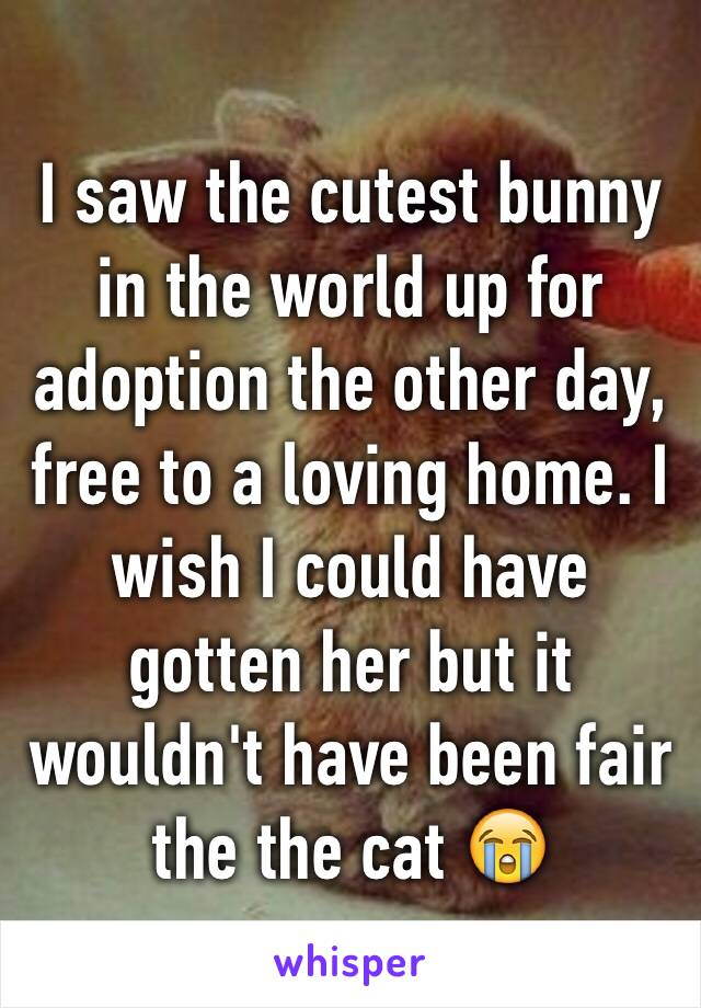 I saw the cutest bunny in the world up for adoption the other day, free to a loving home. I wish I could have gotten her but it wouldn't have been fair the the cat 😭