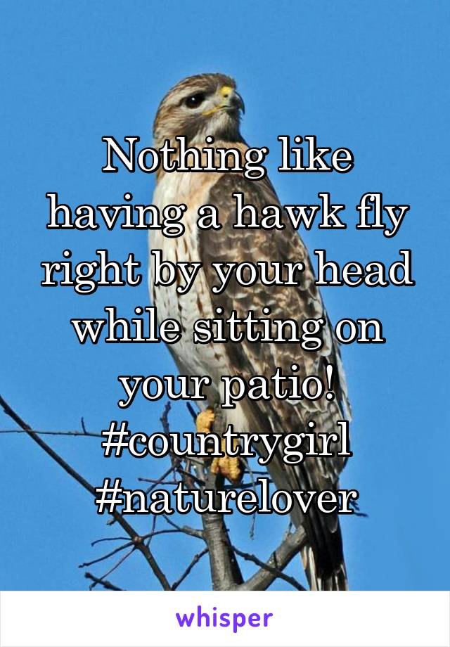 Nothing like having a hawk fly right by your head while sitting on your patio! #countrygirl #naturelover