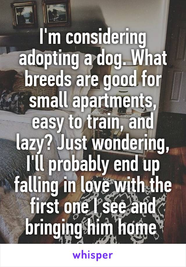 I'm considering adopting a dog. What breeds are good for small apartments, easy to train, and lazy? Just wondering, I'll probably end up falling in love with the first one I see and bringing him home
