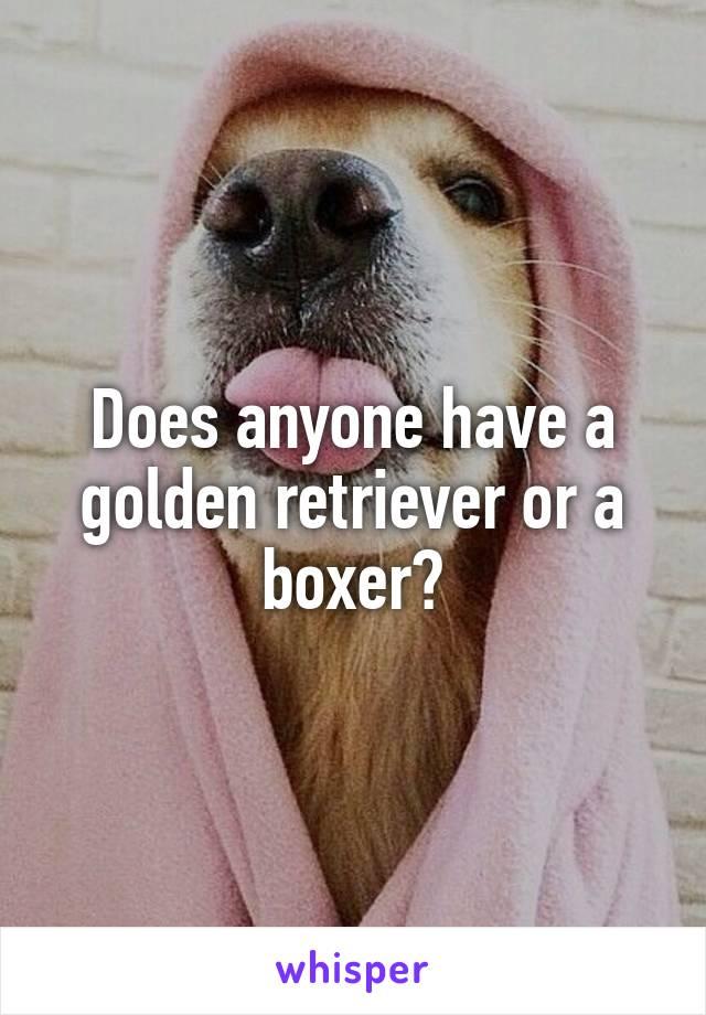 Does anyone have a golden retriever or a boxer?