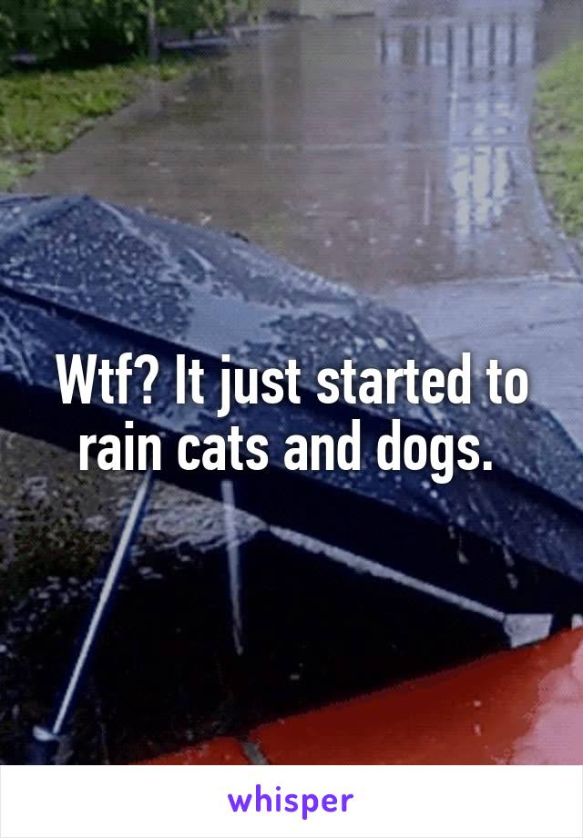 Wtf? It just started to rain cats and dogs.
