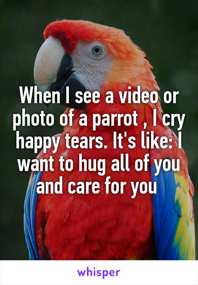 When I see a video or photo of a parrot , I cry happy tears. It's like: I want to hug all of you and care for you