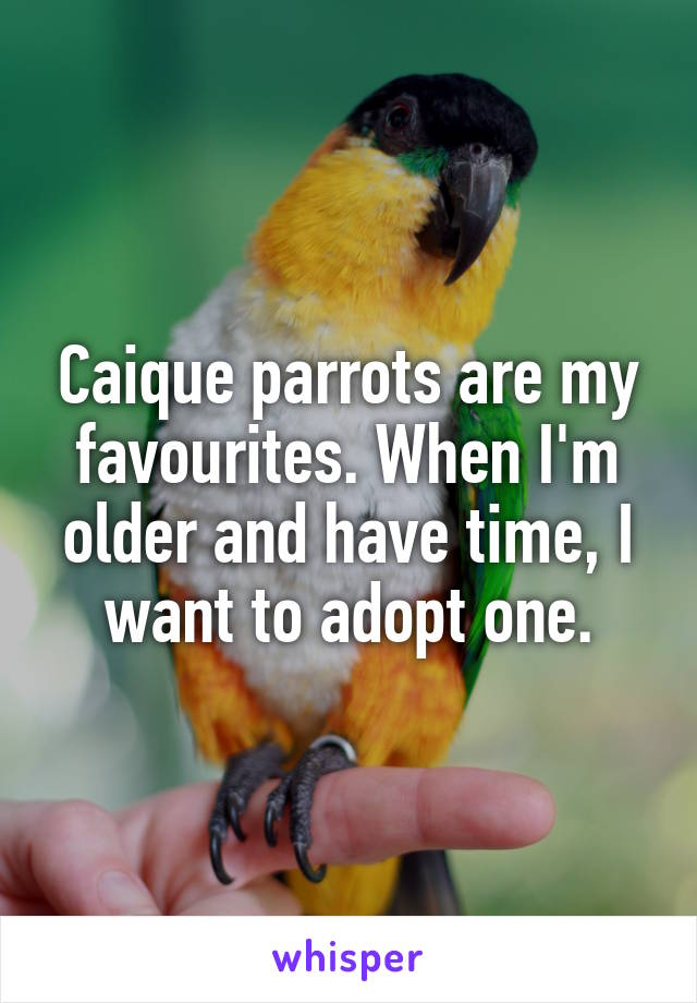 Caique parrots are my favourites. When I'm older and have time, I want to adopt one.