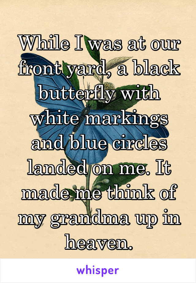 While I was at our front yard, a black butterfly with white markings and blue circles landed on me. It made me think of my grandma up in heaven.