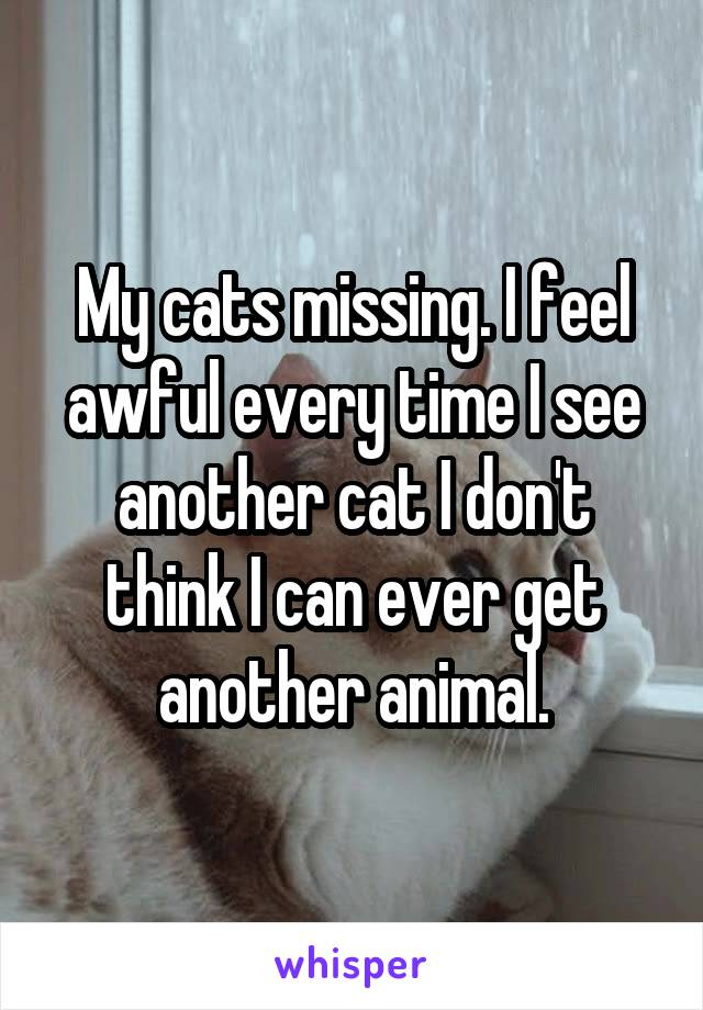 My cats missing. I feel awful every time I see another cat I don't think I can ever get another animal.