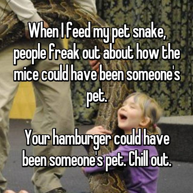 When I feed my pet snake, people freak out about how the mice could have been someone's pet.  Your hamburger could have been someone's pet. Chill out.