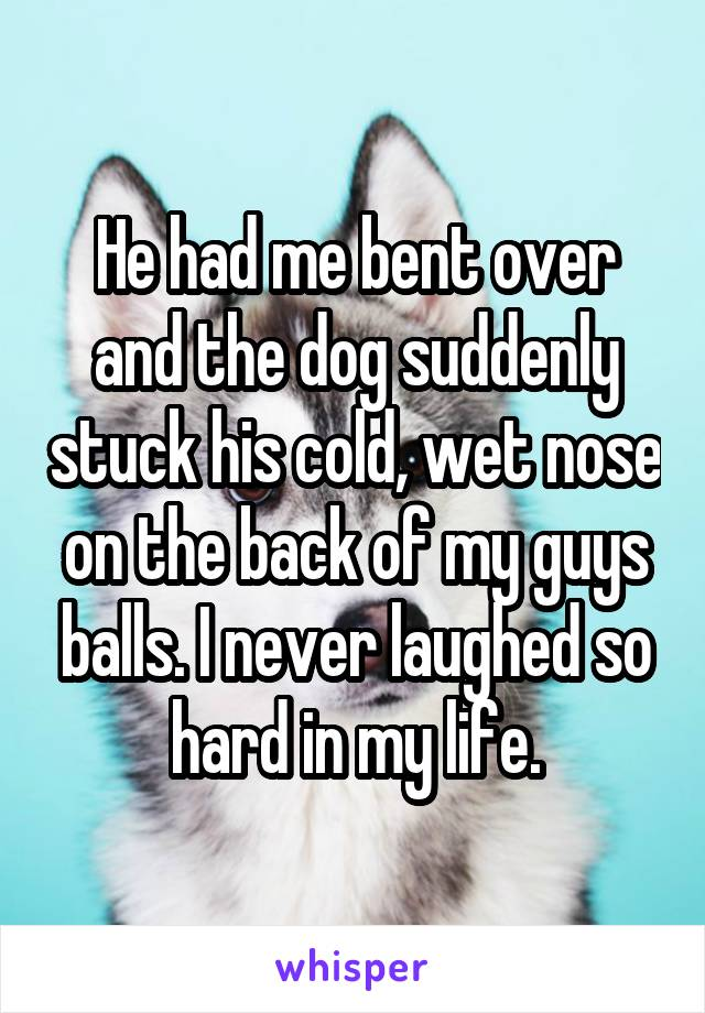 He had me bent over and the dog suddenly stuck his cold, wet nose on the back of my guys balls. I never laughed so hard in my life.