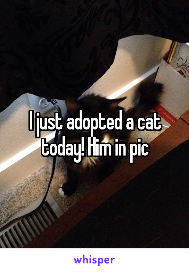I just adopted a cat today! Him in pic