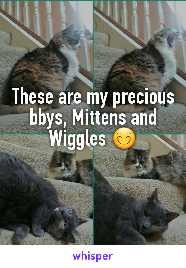 These are my precious bbys, Mittens and Wiggles 😊