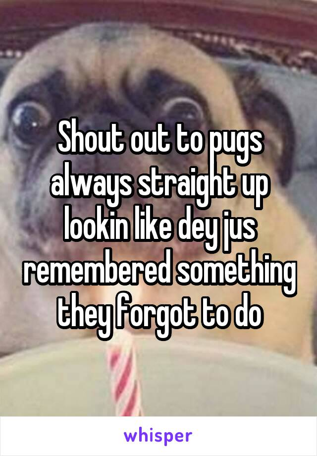 Shout out to pugs always straight up lookin like dey jus remembered something they forgot to do