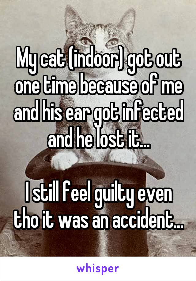 My cat (indoor) got out one time because of me and his ear got infected and he lost it...  I still feel guilty even tho it was an accident...