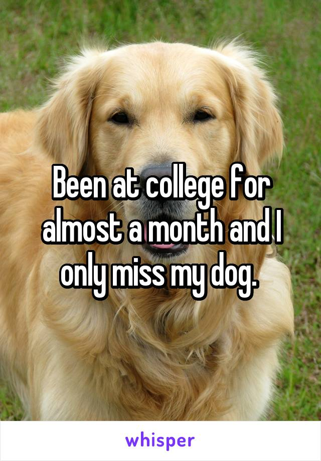 Been at college for almost a month and I only miss my dog.
