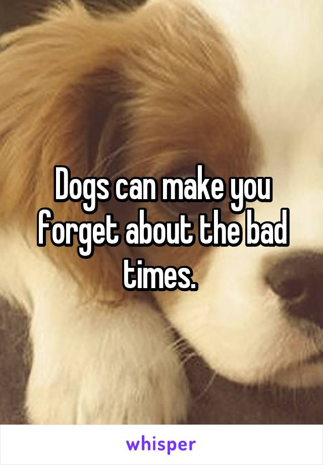 Dogs can make you forget about the bad times.