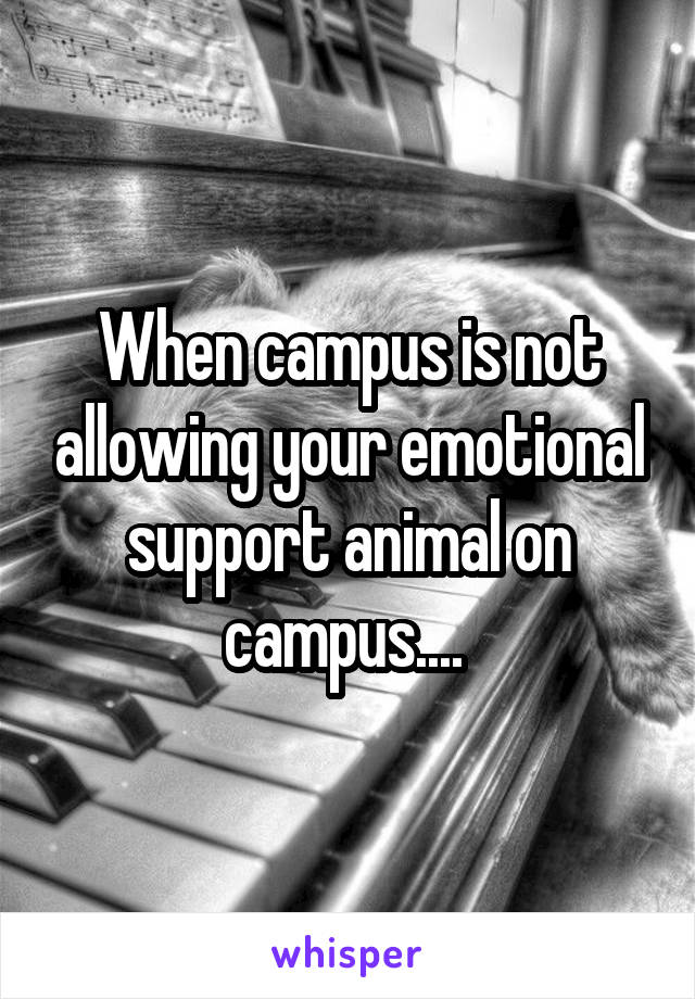 When campus is not allowing your emotional support animal on campus....