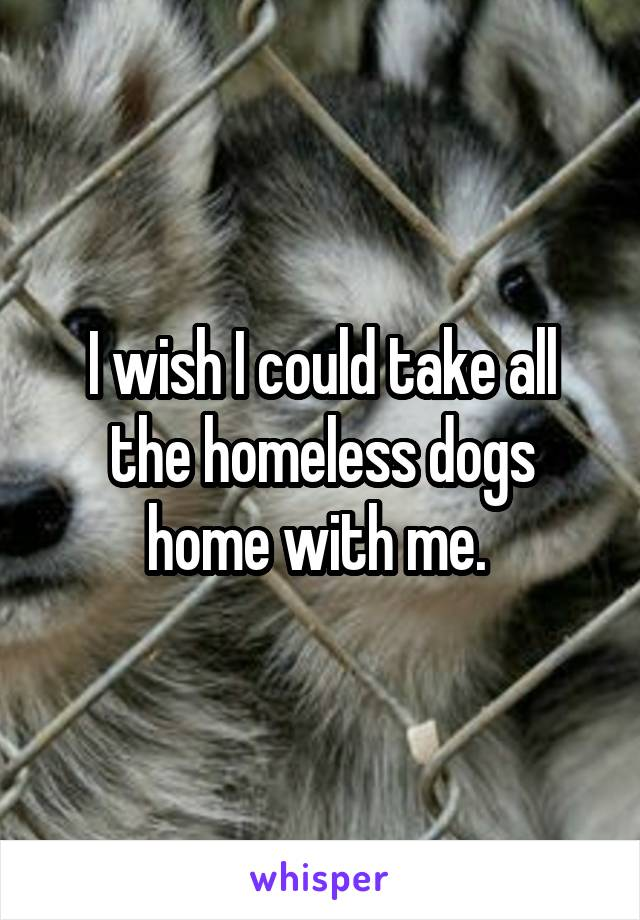 I wish I could take all the homeless dogs home with me.