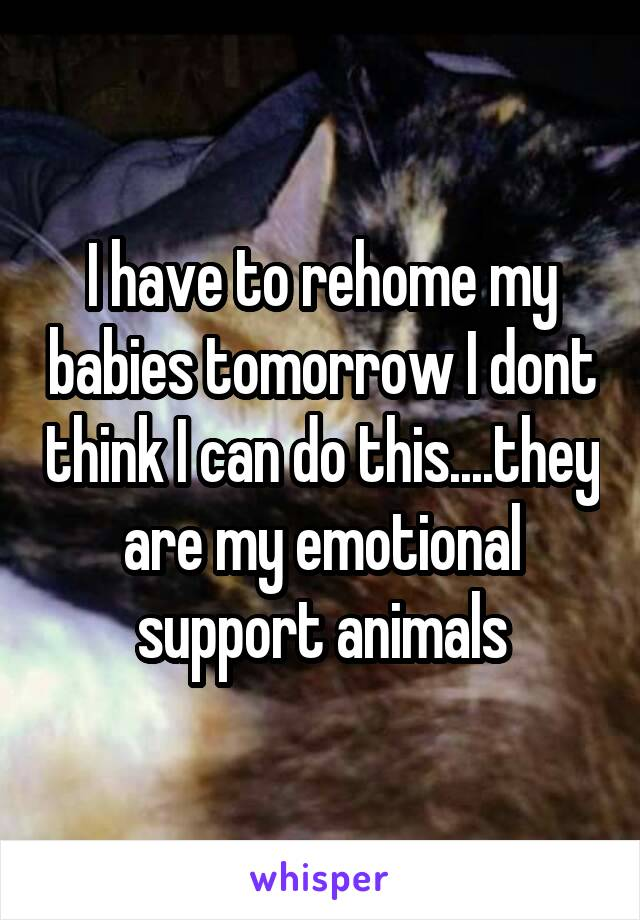 I have to rehome my babies tomorrow I dont think I can do this....they are my emotional support animals