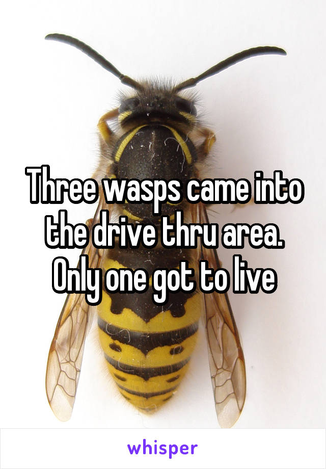 Three wasps came into the drive thru area. Only one got to live