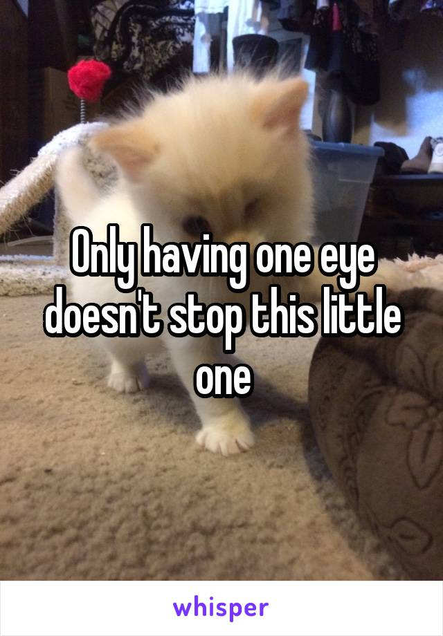 Only having one eye doesn't stop this little one