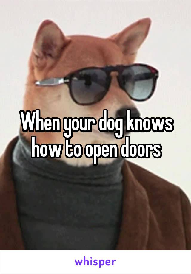 When your dog knows how to open doors