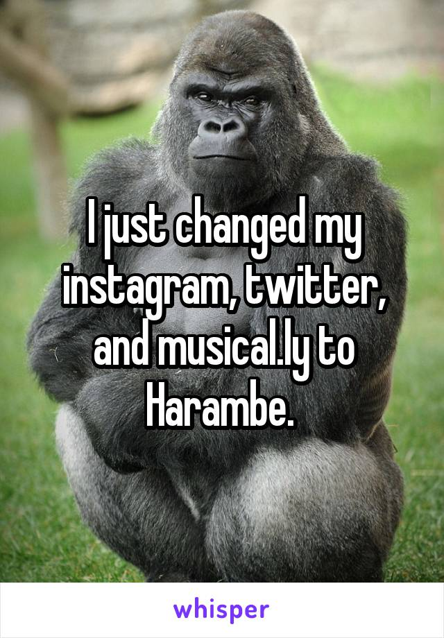 I just changed my instagram, twitter, and musical.ly to Harambe.