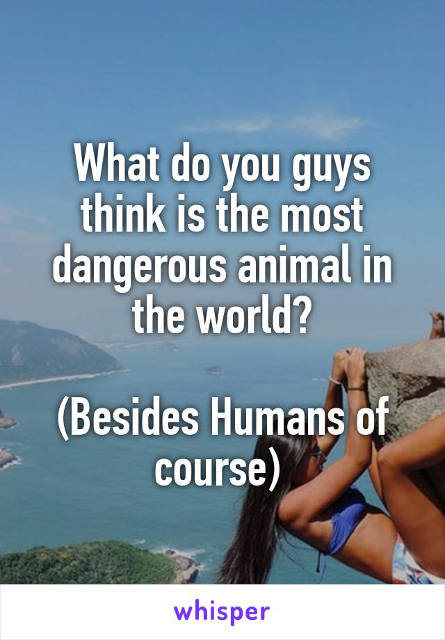 What do you guys think is the most dangerous animal in the world?  (Besides Humans of course)