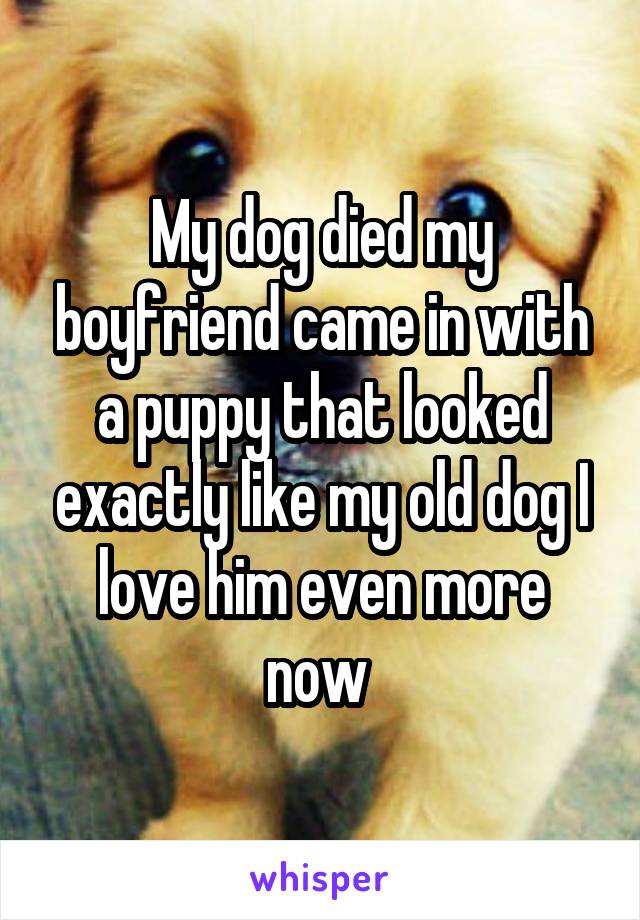 My dog died my boyfriend came in with a puppy that looked exactly like my old dog I love him even more now