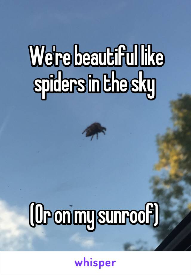 We're beautiful like spiders in the sky      (Or on my sunroof)