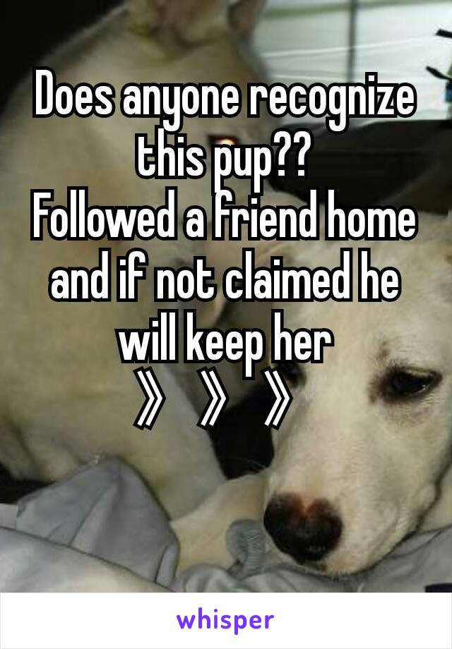 Does anyone recognize this pup?? Followed a friend home and if not claimed he will keep her 》》》